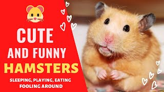 Funny Hamsters! Cute And Funny Hamster Videos Compilation. Funny Animal video!