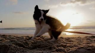 ♥Cute dogs Doing Funny Things 2020♥ #10 Cutest Dogs