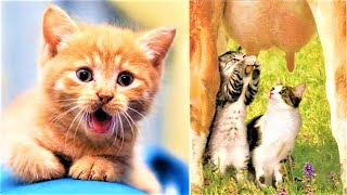 Baby Cats – Cute and Funny Cat Videos Compilation #5 | Moon Creation TV