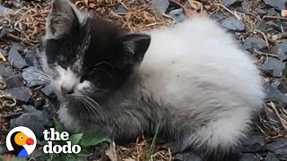 Tiny Abandoned Kitten Asks Woman For Help | The Dodo Soulmates