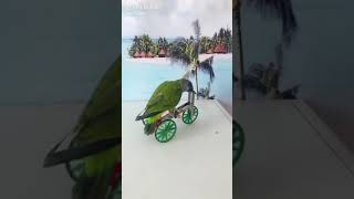 Amazing Animal play games and funny