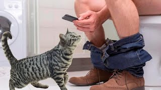 best funny cat videos 😹 you die of laughter