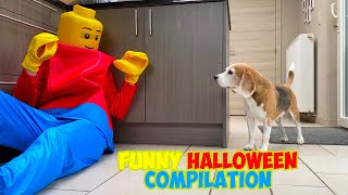 Dogs get Pranked with Scary and Funny Halloween Costumes : Funny Dogs Louie & Marie