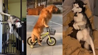 Funny Cute Dogs Caught Being Naughty | Funny Dogs Compilation