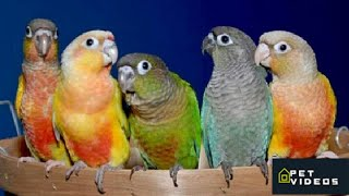 19 funny Birds videos |  Funny Animals Try Not To Laugh videos Compilation