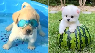 Baby Dogs 🔴 Cute and Funny Dog Videos Compilation #2   Funny Puppy Videos 2021