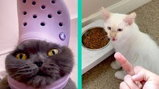 BEST CAT MEMES COMPILATION OF 2020 PART 20 (FUNNY CATS)