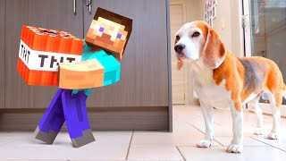 Minecraft In Real LIFE vs Dogs : Funny Beagle Dogs Louie & Marie