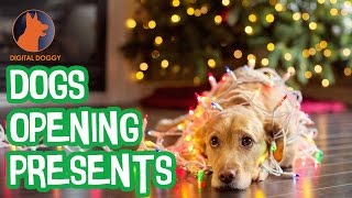 Cute Dogs Opening Presents