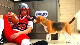 Dogs Vs NFL Tryout : Funny  Dogs Louie & Marie