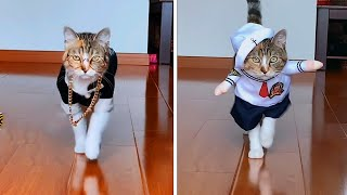 Funny & cute Cat Vines compilation 2021 #12 – Funny Cute Cats Fashion Show 🐱