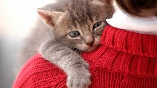 Funny Cats Jumping Into Owner's Arms Compilation    NEW HD
