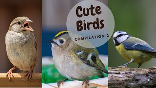 Cute Birds Video Compilation (2021) | Bird Lovers Part 2