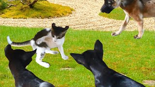 Cute Cats and Dogs Video Compilation