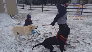 FUNNIEST DOGS in SNOW COMPILATION – Haven't seen better yet! Enjoy watching and LAUGH with us!
