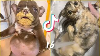 OMG So Cute 😛 Best Funny Cats and Dogs Compilation #16