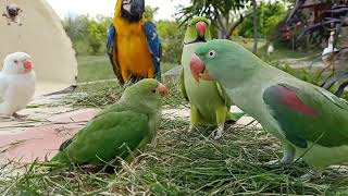 Funny Parrots Talking MOM and Everything #4 – Funny animals | funny birds talking video 2020 #animal