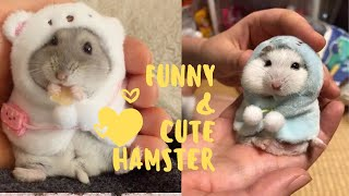 Funny and Cute Hamster Compilation 🔴 – Funniest Hamsters Of All Time 2020