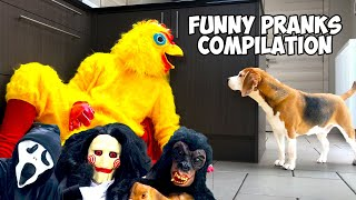 Funny Dogs Get Pranked with Fun & Scary Halloween Costumes!