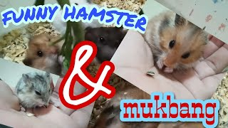 Cute Hamster !!!!! Funny Hamsters Videos compilation #3