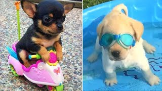 Baby Dogs 🔴 Cute and Funny Dog Videos Compilation #3 | Funny Puppy Videos 2021