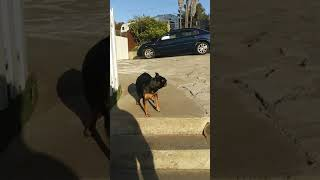 Best Funny Dogs 🐶 And Cats 😹 Videos – Try Not To Laugh!