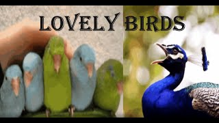 Lovely Birds | Cute birds compilation for kids