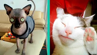 BEST CAT MEMES COMPILATION OF 2020 PART 25 (FUNNY CATS)