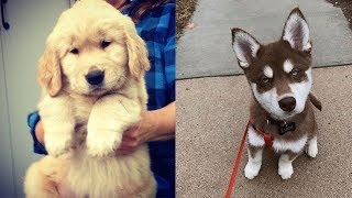 Cute And Funny Puppies Videos – Cute Puppies Doing Cute Things   Funny Dogs And Cats