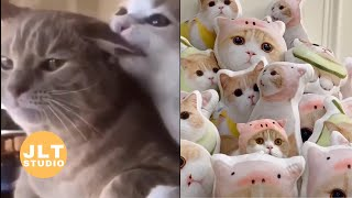 Funny Cat Videos – Cats Reacting To Animals – Cats Playing – Try Not To Laugh   Just Like Cat