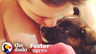Family Fosters A Pair Of Puppies — And The Dad Falls In Love   The Dodo Foster Diaries