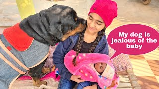 Anshu is confused to manage baby and jerry||cute dog video.
