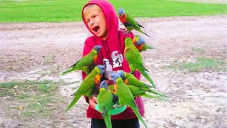 Try Not To Laugh – Funny Birds Trolling Human
