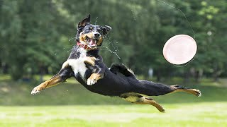Funny Dogs Jumping 😍🐕 Playful Pets [Funny Pets]