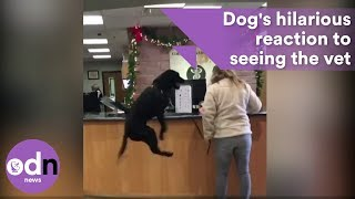 Hilarious dog's reaction to seeing the vet was unexpected