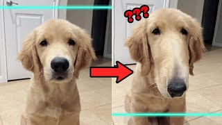Time Warp Scan TikTok Compilation – Funny Dogs And Cats Reaction