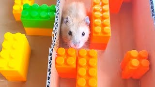 FUNNY HAMSTERS – My Hamster Escape from the LEGO maze!