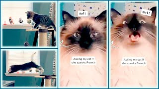 WEE meme, but with CATS! 😸😛 | CUTE CATS TIKTOK COMPILATION #19