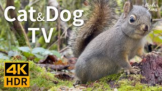 Cat and Dog TV 4K HDR: Tiny Barking Squirrel and Cute Birds – 10-bit Color