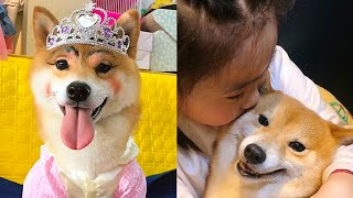Funny dogs like makeup😚Children and cute dogs🤗Use the dog as a game console😥 dog and baby