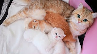 💕 22 days after birth | Kittens meowing, plays and learn to walk