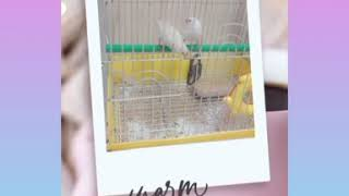#Finches#Birds Finches play time|Finches are playing| Cute Birds