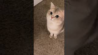 Cute Cats and Kittens Meowing March 1, 2021