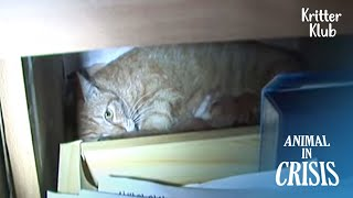 Mom Cat Tells Her Kittens Not To Cry Or Else People Will Take Their Lives | Animal in Crisis EP223