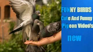 FUNNY BIRDS – Cute And Funny Pigeon Videos Compilation || NEW