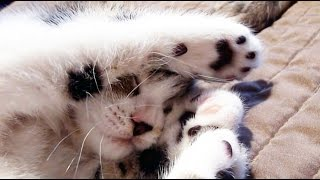 Cute Kitten likes to eat Toffee – Funny Cat