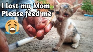 rescue kitten lost her mom in bushes  scared kitten rescue  rescued by animals cottage-rescue center