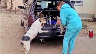 Mama Dog Reunited with her Stollen Puppies… She is Crying from Happiness