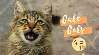 Cute cats playing with ball funny video @funnyplox