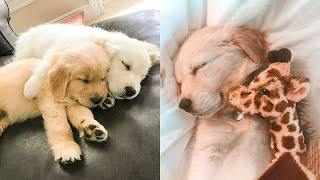 Cute Puppies Doing Funny Things 2021 #2 Cutest Dogs